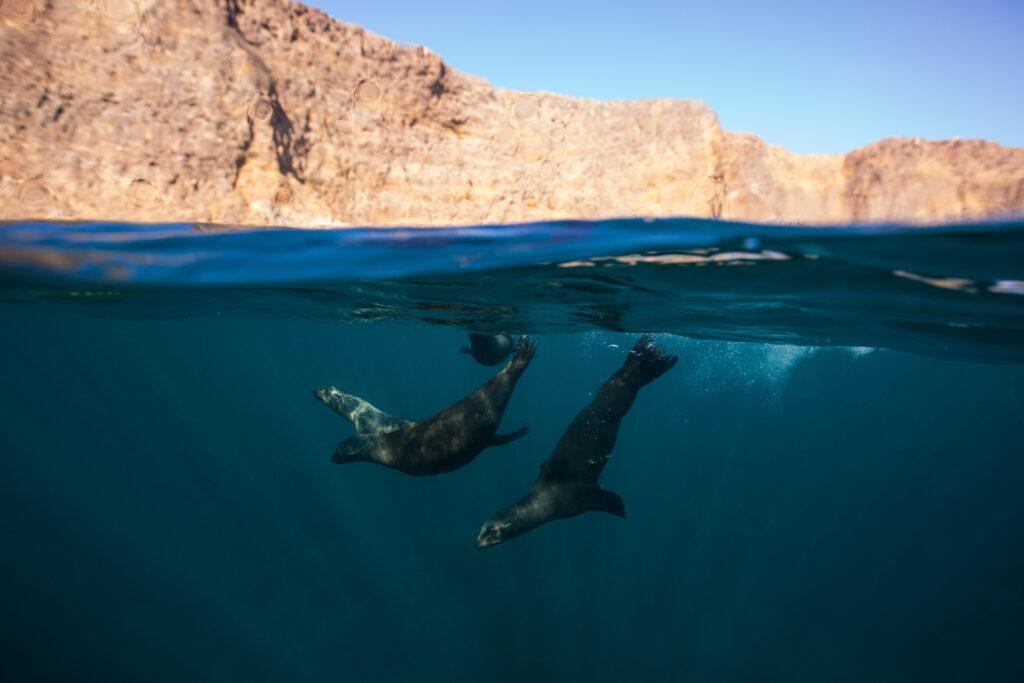 Seals near Channel Islands